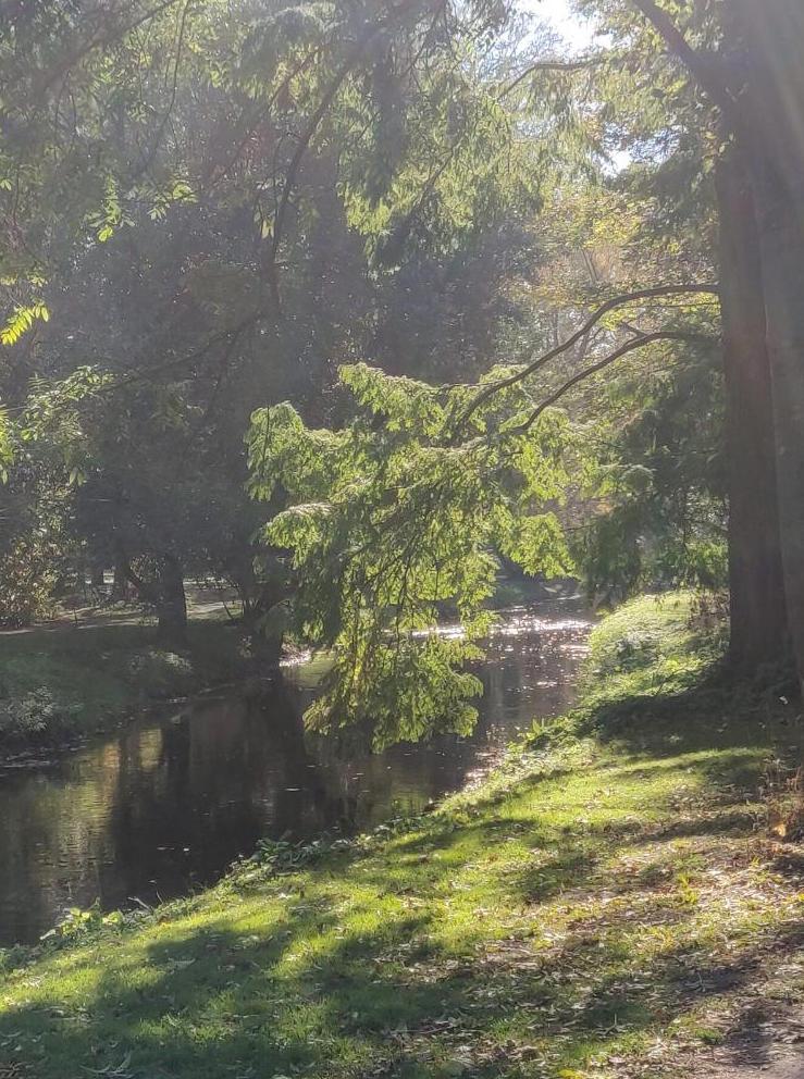 Schlosspark Trauergedanke